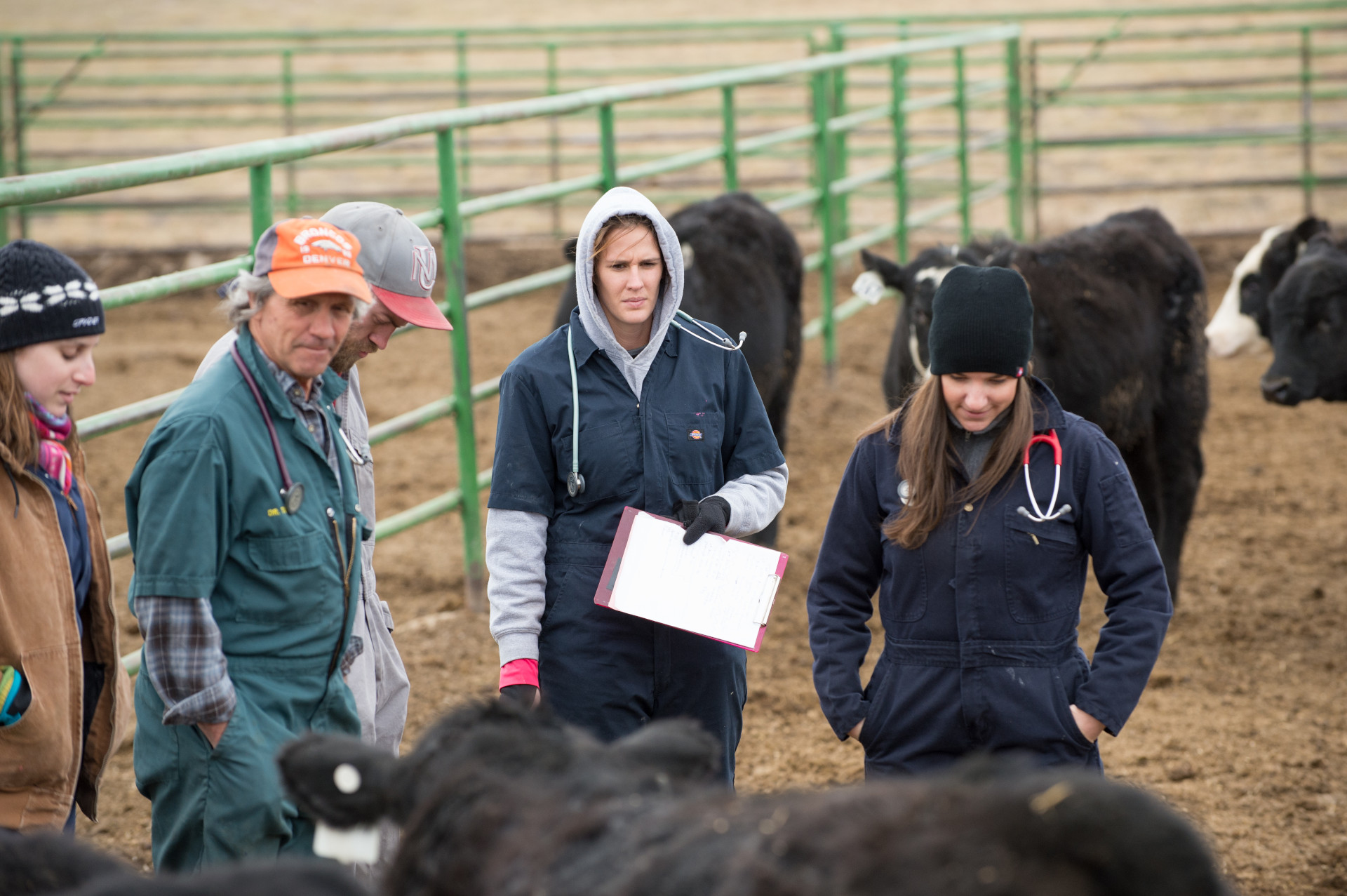 vet students and cattle