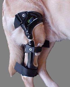 dog leg in stifle brace